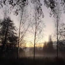 Foto van silhouet bomen in het ochtendlicht